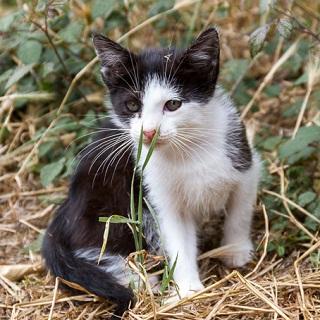 Los gatitos de Begoña
