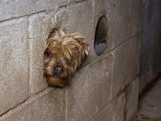 Operación Happy Dog
