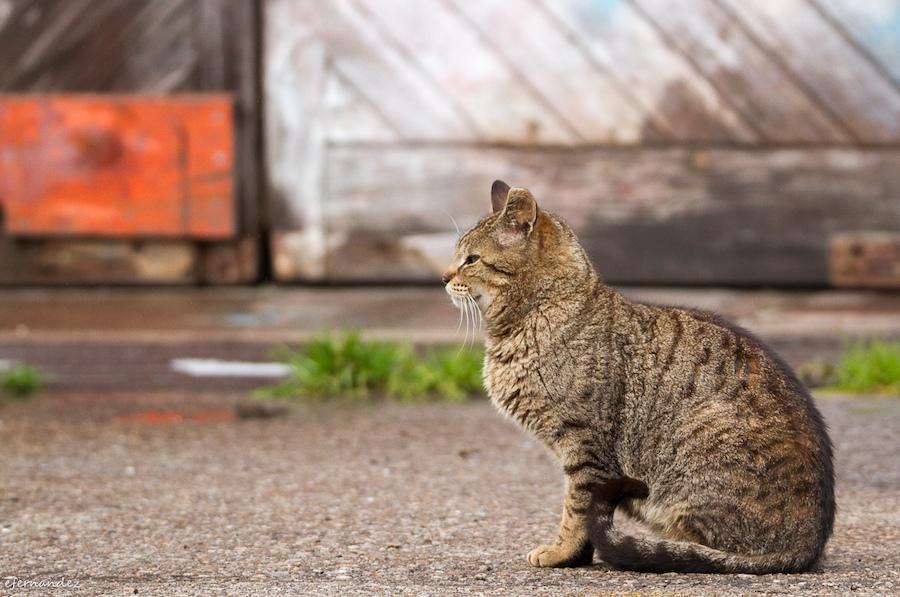 Teaming para los gatos callejeros